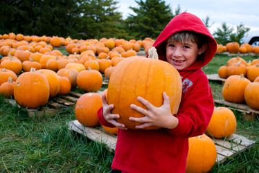 A young boy in a red hoodie holds a large pumpkin while standing in the middle of a pumpkin patch