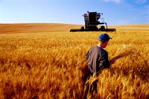 Original Photo Credit: tpmartins --- 457-AG-080-U4669 (a young boy walking through a wheat field near farm equipment)