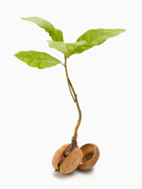 Plant growing out of an acorn
