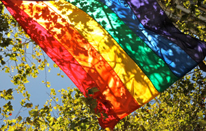 A rainbow flag flying in blue skies near a tree